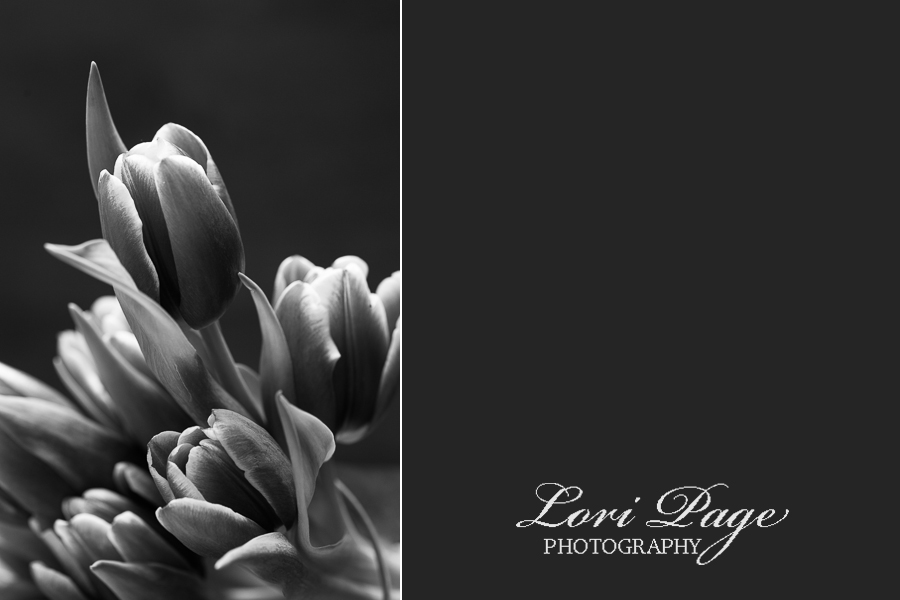 © Lori Page Photography | Ann Arbor, Mi Macro Photographer