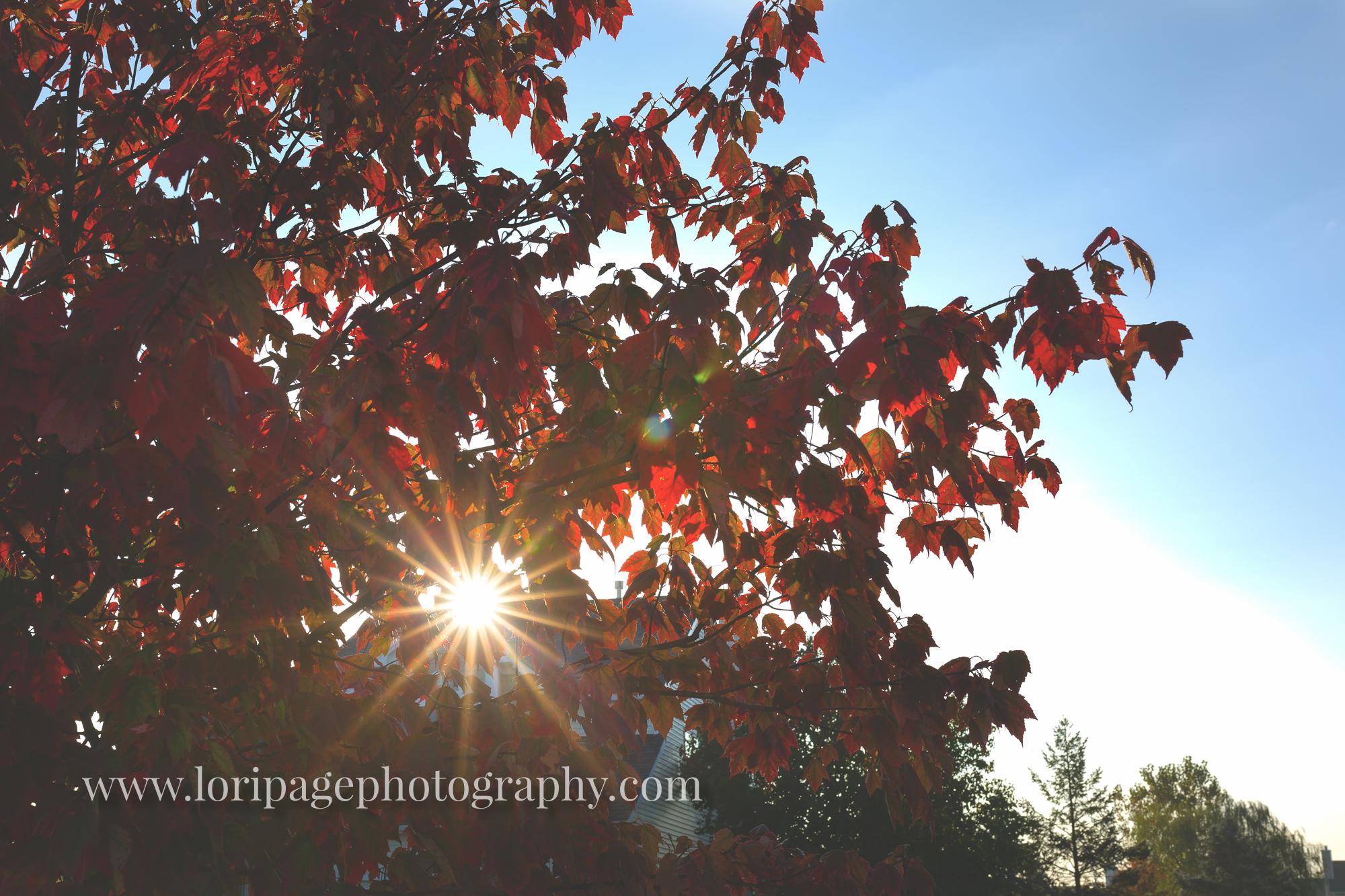 Ann Arbor photographer