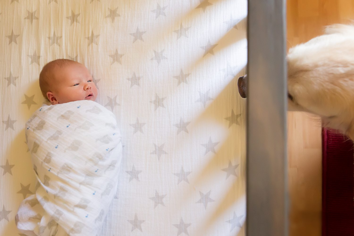 Ann Arbor in-home newborn photographer