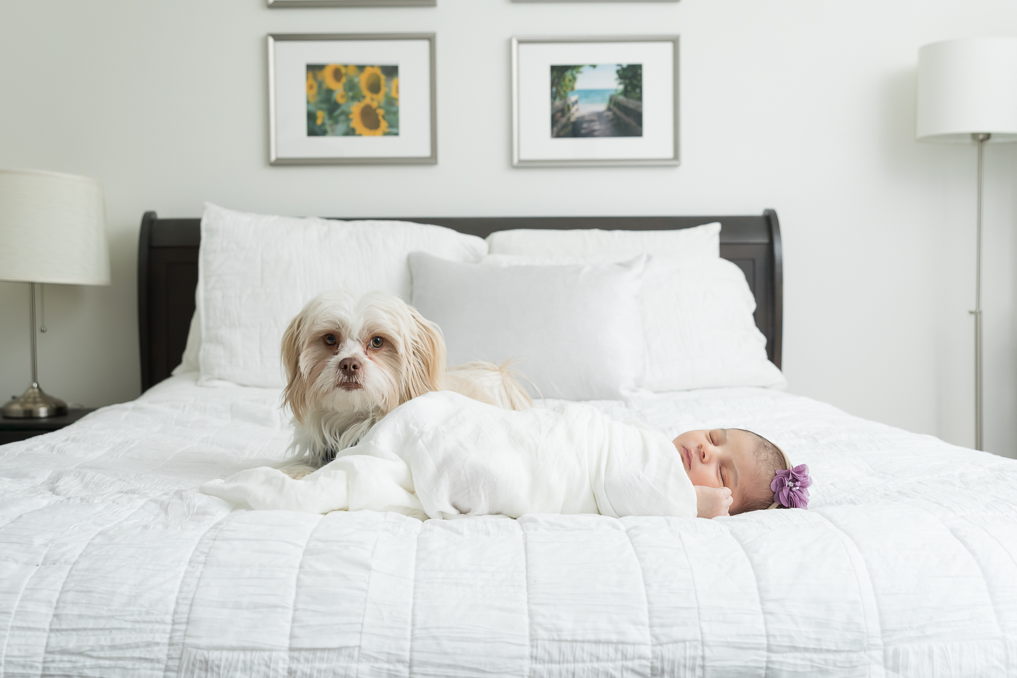 Ann Arbor Baby Photos | Three Generations & a Pup