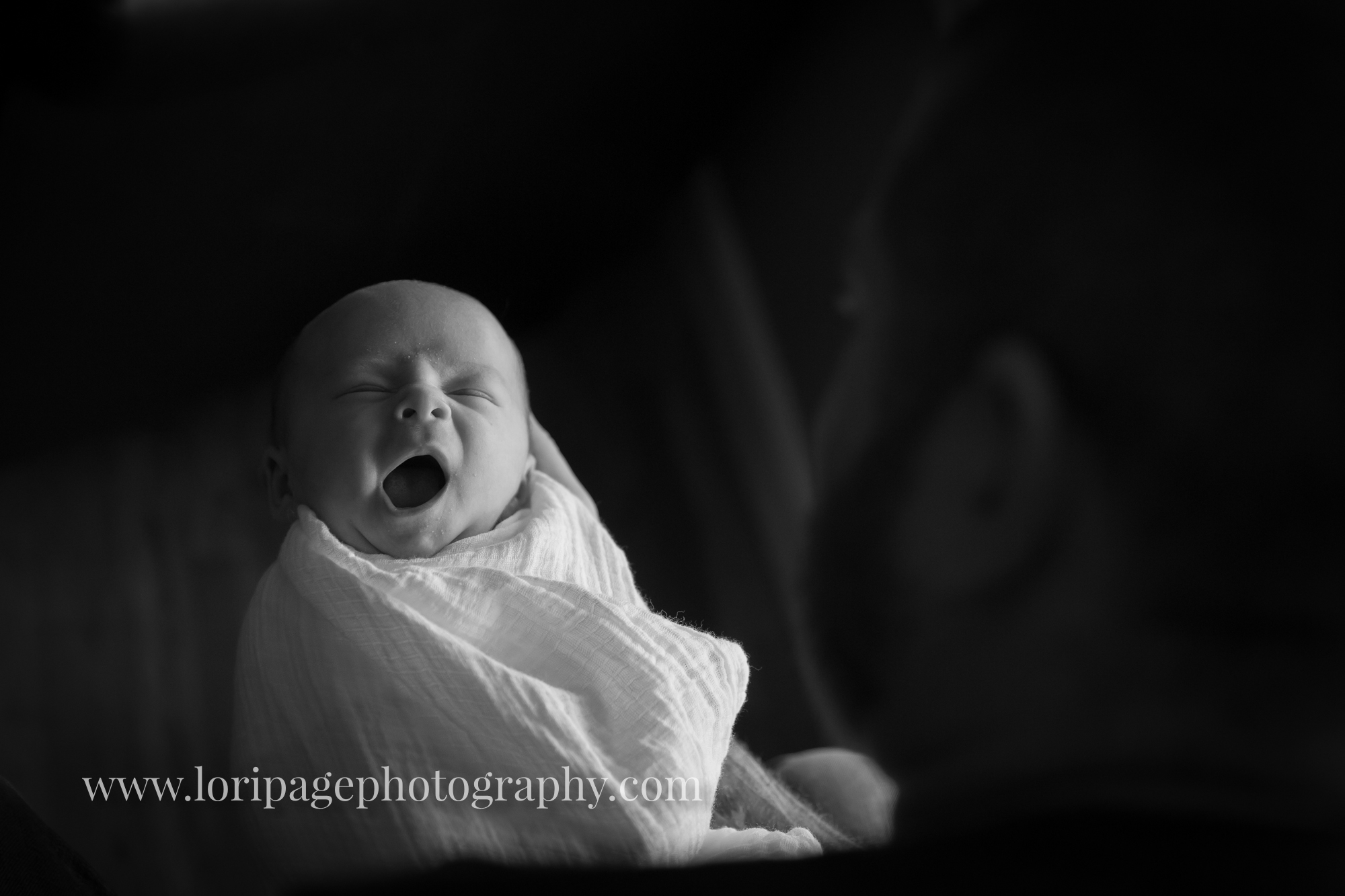 Plymouth Mi newborn photos